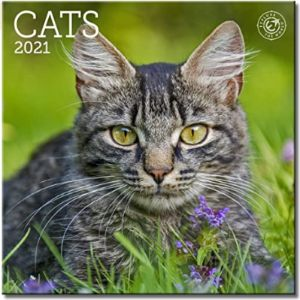 Ziga Media Mini Cat Calendar