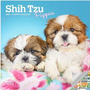 Calendar Boutique Shih Tzu Puppies Calendar
