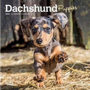 Browntrout Mini Dachshund Calendar
