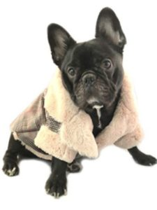 Fit Frenchie profile picture