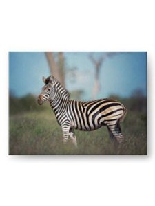 Whimsical Wild Artwork nature  profile pictures