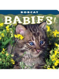 Farcountry Press    bobcat babies