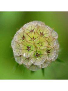 grandpasflowerseeds golf arrangement  ball flowers