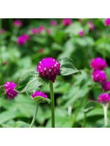 underthesunseeds golf arrangement  ball flowers