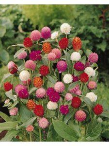 wbut2023 golf arrangement  ball flowers