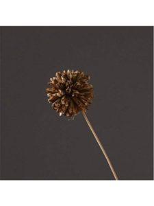 WDS j crew necklace  flower balls