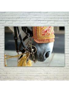 Westlake Art horse  wedding photographies