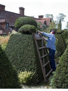 Home Comforts topiary  electric trimmers