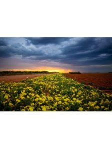 Southern Plains Photography yellow  profile pictures